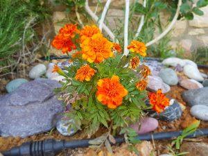 λουλούδι κοντά
